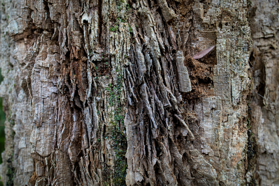 Tingle tree