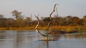 na řece Kwando